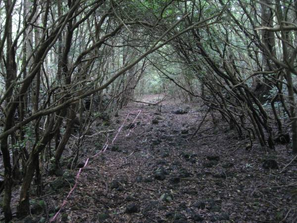 Japan's Suicide Forest - Tranquility Funeral Services